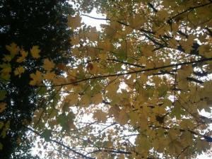 Under tree branch